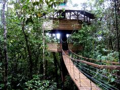 tree houses to live in | Living Abroad in Costa Rica » Quien is mas treehouse? Life in the ...