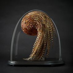 Kate MccGwire (previously) born 1964 is an English sculptor who specializes in the medium of feathers.