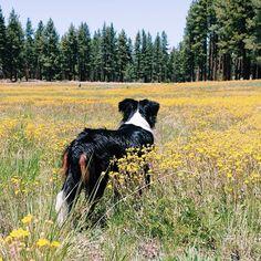 wildflower pup // claire cudahy's instagram