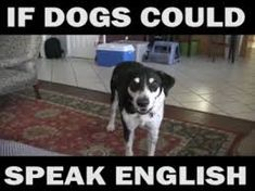 Funniest Animal Memes In The World : Funny animal pics so funny funny animal