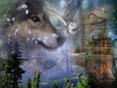 wolf dreams | Owl Wolf Dream