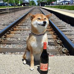 2008 Red Car Wine Company Box Car Pinot NoirJust enjoying this... #shiba