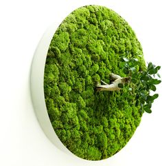 Collapsible Leaves by Azuma Makoto - Collapsible Leaves by Azuma Makoto is an interesting plant art series that features folded and layered leaves. Azuma makes these sculptures by usin. Moss Wall Art, Moss Art, Graffiti En Mousse, Azuma Makoto, Leaves Of Grass, Moss Decor, Moss Garden, Garden Oasis, Deco Floral