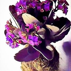 KOKEDAMA PHOENIX 💜Do you own a Kokedama yet?  #gardening #kokdama #mossballs #stringgardens #kalanchoe #houseplants #floral #design #cactus #succulents