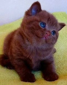 KITTY GIVES HER HUMAN NECK KISSES IN THIS MOST ADORABLE CLIP! Cute Kittens, Cute Baby Cats, Kittens And Puppies, Cute Funny Animals, Cute Baby Animals, Easy Animals, Funny Pets, Pretty Cats, Beautiful Cats