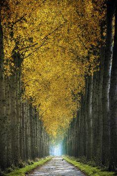 Lars Van De Goor photography.