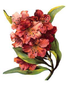 ArtbyJean - Vintage Clip Art: Lovely red flowers pinned with #Bazaart - www.bazaart.me