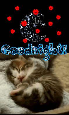 Good Night Meme, Good Night Cat, Good Night Sleep Well, Funny Good Night Quotes, Good Night Prayer, Cute Good Night, Good Night Friends, Good Night Blessings, Good Night Wishes