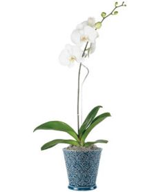 We love orchids! Learn more about the tips and tricks behind taking care of orchids on our blog!