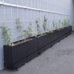 KVETINÁČE Portfolio, Plants, Plant, Planets