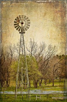 Windmill in the Bluebonnets, along the Blue Bonnet Trail,  just off Sugar Ridge Road and Texas 660. c.