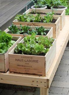 Vintage crate veggie garden