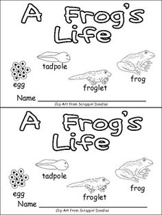 A Frog's Life Emergent Reader for Kindergarten- Life Cycles First Grade Science, Kindergarten Science, Elementary Science, Science Classroom, Teaching Science, Montessori, Frog Life, Emergent Readers, Student Teaching