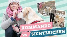 Hundeerziehung: Kommando vs. Sichtzeichen im Hundetraining