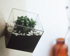 Glazen terrariums. Warmte-vanaf 2 mm transparant glas, die handmatig knippen en creëren duurzame lasbare verbinding van afzonderlijke gezichten.  4 variant maten  8 x 8 cm. 12 x 12 cm. 15 x 15 cm. 24 x 24 cm. Terrarium heeft een gat in plaats van één van de gezichten voor luchtcirculatie en gemakkelijke toegang tot de plant.  ++++++++++++++++++++++++++++++++++++++++++++++++++++++++++++++++++++++++++++++++++++++++++++++++++++++++++  Korting 15% Een collectie maken met dit product Wanneer…