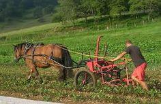Afbeeldingsresultaat voor horse traction