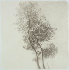 Silverpoint Archives - Sarah Gillespie