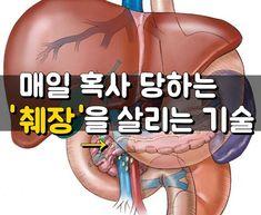 매일 혹사 당하는 췌장을 살리는 기술  우리의 장기중 가장 구석에 있고, 증세가 가장 늦게 발견되는 췌장, ?췌장암으로 확인되었을 경우는 수술할 수 없는 경우에 해당되어 죽는날만 기다려야 하는 병입니다 췌장.. Human Anatomy, Health Tips, The Cure, Healthy Living, Health Fitness, Lose Weight, Medical, Diet, Survival