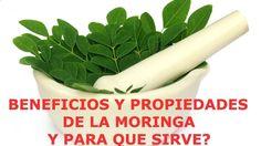 Propiedades y Beneficios De La Moringa - Para Que Es Buena La Moringa