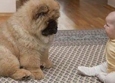 A gyermek fél oldala le volt bénulva, az orvos azt tanácsolta a szülőknek, hogy vegyenek egy bizonyos fajta kutyát! Marvel, Dogs, Animals, Pizza, Animales, Animaux, Pet Dogs, Doggies, Animal