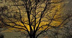 Tree, Branch, Sky, Sunset