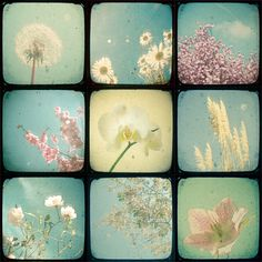 "Set of Nine 4x4"" Mini Prints - Garden from Cassia Beck by DaWanda.com"