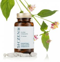 South African Wholesaler/Distributor of Beauty Products Agents,Skin Care. ShZen is a South African Wholesaler/Distributor for you to purchase Beauty Products Agents,Skin Care Collagen, Candle Jars, Zen, Glow, Nutrition, Skin Care, Candle Mason Jars, Collages, Skincare