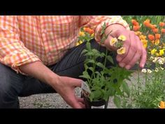 Choosing Flowers for the Season | At Home With P. Allen Smith
