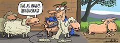 ¿Esteticien de granja?. Esquilar ovejas ya no es lo que era. Depilación ovina por Luis Davila (O Bichero) el 20/10/2014.