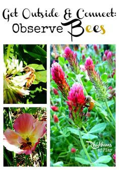 Observe Bees -- A fun activity to do with your kids! Includes links to more information and fun bee crafts for bee nature study unit's.