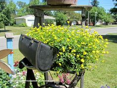 Metamorphosis of four container plantings from earl... A red lantana in a funnel on a broom handle. A Proven Winners Gold Dust in a vintage lunch box. A Proven Winne...