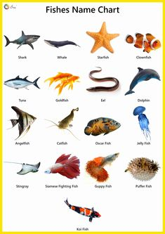Explore our list of fish names in English. High-quality pictures, photos, videos, printable charts, stickers and colouring sheets for kids. Animal Activities, Kids Learning Activities, Montessori Activities, Toddler Learning, Learning English For Kids, English Lessons For Kids, Animals Name With Picture, General Knowledge For Kids, Insects For Kids