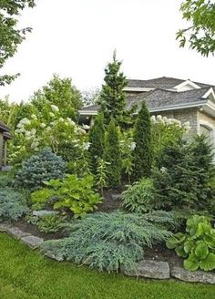 Beautiful display of landscaping with evergreens More #landscapingbackyard