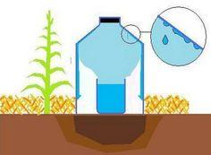La tecnica di irrigazione a goccia solare.