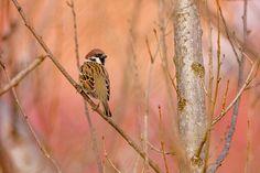 Bird Feeders, Owl, Birds, Contemporary, Animal Kingdom, Outdoor Decor, Wordpress, Blog, Photography