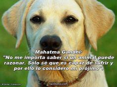 """""""No me importa saber si un animal puede razonar, solo se que es capaz de sufrir…"""" Gandhi"""