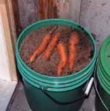 Successful cold storage. Interesting. Never thought of using a bucket for longterm vegetable storage, but without the desired root cellar it's a great idea!