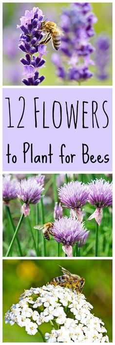 Here is a great list of flowers to plant for the bees! These flowers make a nice pollinator garden, and they are beneficial for us too! Save the bees! #bees #savethebees #pollinatorgarden