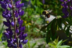 The Bizy Bee by Hidden_Paradise_Photography