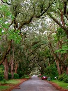 a tree lined street in Charleston SC