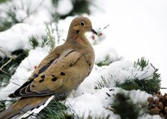 """Holiday Dove Greeting Card for sale by Christina Rollo.  Our premium-stock greeting cards are 5"""" x 7"""" in size and can be personalized with a custom message on the inside of the card.  All cards are available for worldwide shipping and include a money-back guarantee."""