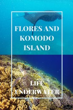 A trip to Flores Island in Indonesia, visiting the Komodo dragons and underwater life experience