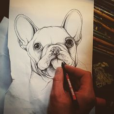 Sketch of a french bulldog puppy , sketchbook , drawing , pen and ink ….