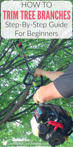 How to Trim Tree Branches | Get Busy Gardening