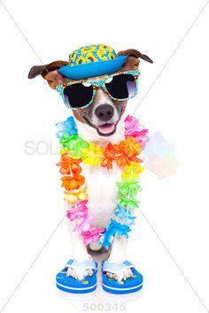 stock photo of dog on vacation with hawaiian lei