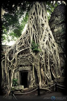 Ta-Prohm, Cambodia Ankor Wat, I stood in that doorway almost 4 years ago <3