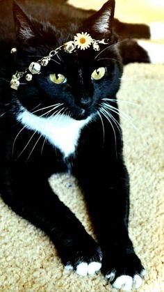 bite noire sur la chatte blanche gratuit filles chatte pic