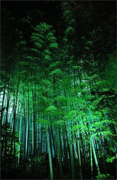 Amazing Nature & Places Pictures) - Bamboo forest in Kyoto, Japan