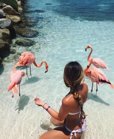 Be vervy and hang out with pink flamingos. VervyVibrancy.com (Photo credit unkown)