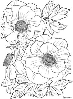 Dover publications Anemone, flower
